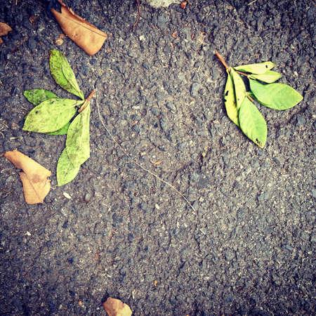Las hojas caídas Foto de archivo - 30950034