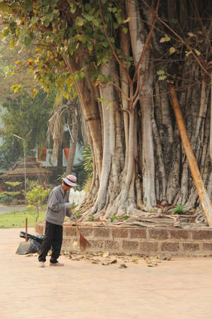 Man sweeping leaf around big tree in temple , Thailand photo