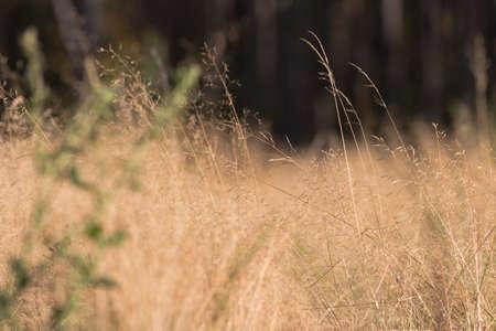 breeze: Autumn field grass in breeze