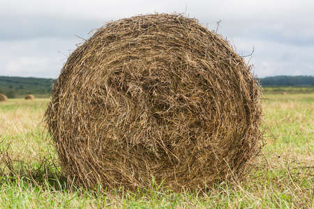 haystack roll on the field close up on green grass. Stock Photo