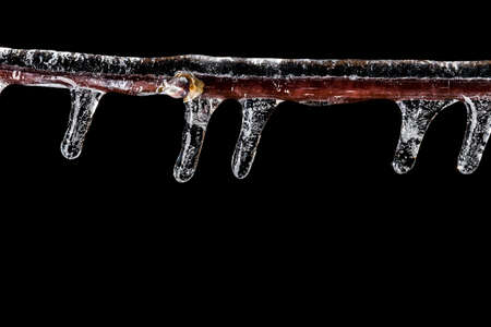 ice storm: Winter concept. Photo of branch covered in ice with icicles after an ice storm on black background. Macro shot. Stock Photo