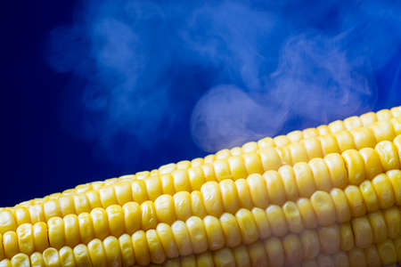 steaming: Steaming corn close up on blue background Stock Photo