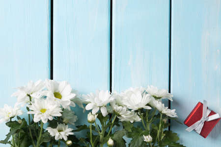 georgina: White chrysanthemum flowers with gift box on nice blue wooden table. Holiday card. Stock Photo