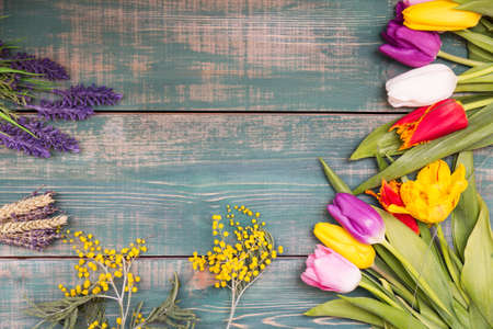 Colorful spring tulip flowers on green wooden background with mimosa and lavender as greeting card with free space.