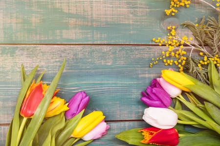 Colorful spring tulip flowers on green wooden background with mimosa as greeting card with free space.