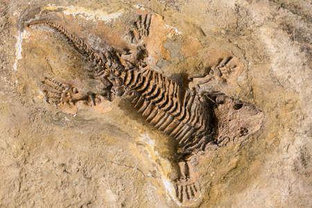 Squelette de fossiles de reptiles antiques dans la pierre. Banque d'images - 79740241