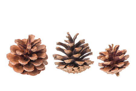 Group of cones of coniferous trees isolated on white background