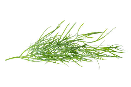 Fresh dill plant close up isolated on white background