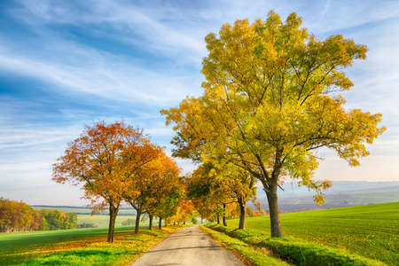 Amazing autumn landscape of country road with colorful trees and blue sky with green grass in South Moravia region, Czech Republic Stock Photo