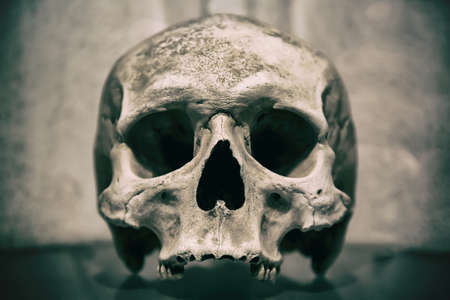 Old human skull close up. Toned image.