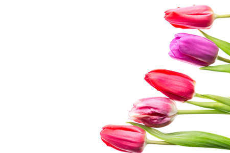 Colorful tulips flowers isolated on white background with free space. Mothersday or spring concept