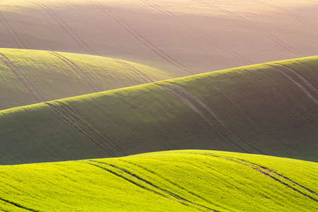 Rural spring agriculture texture background. Green waves hills in South Moravia, Czech Republic during sunset. Green fields landscape Stock Photo