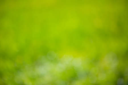 Defocused blurred nature green background with soft bokeh lights. Abstract natural texture background 版權商用圖片