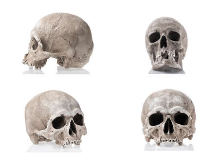 Human skulls isolated on white background with reflections. Side and front views collage set. Anatomy and medicine concept