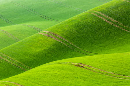 Nature abstract minimalistic background pattern. Rolling hills of green wheat fields. South Moravia, Czech Republic.