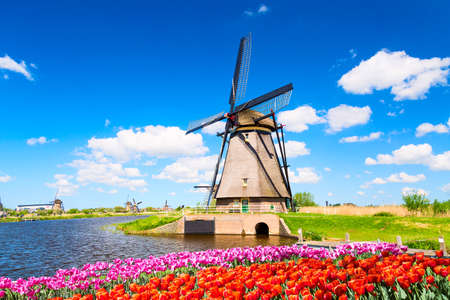 Colorful spring landscape in Netherlands, Europe. Famous windmill in Kinderdijk village with a tulips flowers flowerbed in Holland. Famous tourist attraction in Holland. Stock Photo