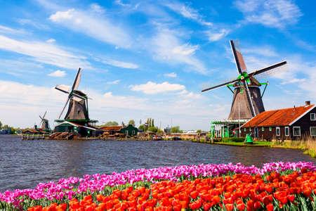 Niederländische typische Landschaft. Traditionelle alte holländische Windmühlen mit Haus, blauer Himmel in der Nähe des Flusses mit Tulpen Blumen Blumenbeet im Dorf Zaanse Schans, Niederlande. Berühmter Tourismusort