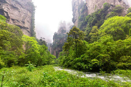 Zhangjiajie National forest park. Famous tourist attraction in Wulingyuan, Hunan, China. Amazing natural landscape with golden whip stream and stone pillars quartz mountains in fog and clouds.