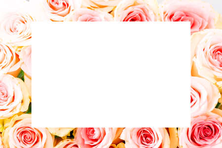Bright pink roses with white copy space as a background Stock Photo