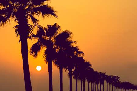 Sagome di palme tropicali in una riga durante il tramonto. Sfondo di viaggio