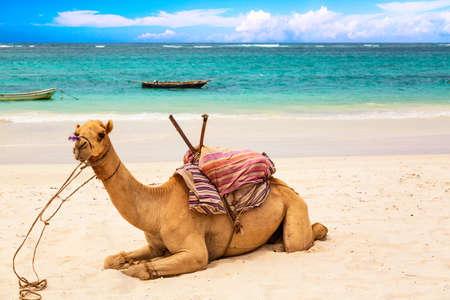 Camel at African sandy Diani beach, Indian ocean in Kenya, African landscape Foto de archivo