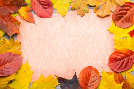 Autumn concept. Frame composed of colorful autumn leaves foliage.