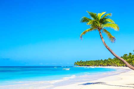Palme am tropischen Strand der Karibik. Insel Saona, Dominikanische Republik. Urlaubsreise-Hintergrund.
