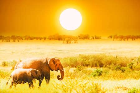 Artistic fantastic african sunset landscape. African elephants in Amboseli National Park. Kenya, Africa at a sunset
