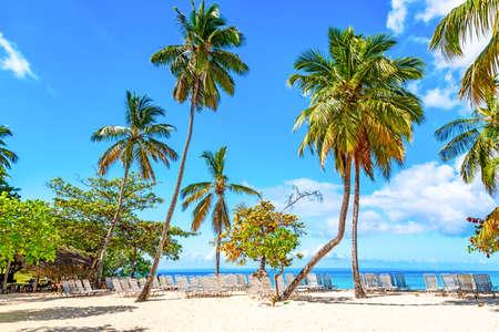 Beautiful Cayo Levantado island beach with palms. Samana, Dominican Republic. Vacation travel background.