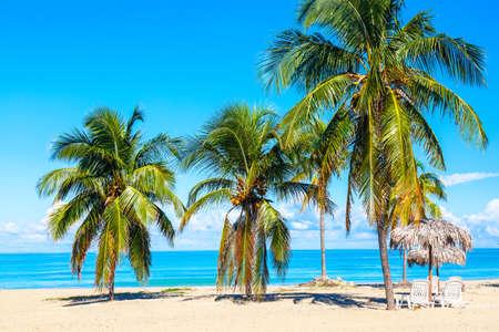 Sun loungers under straw umbrellas on the sandy beach with palms near ocean and sky. Vacation background. Idyllic beach landscape. Varadero, Cuba.