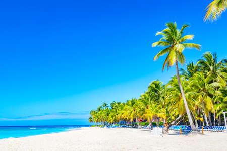 Palmiers sur la plage tropicale des Caraïbes. Île de Saona, République dominicaine. Fond de voyage de vacances.