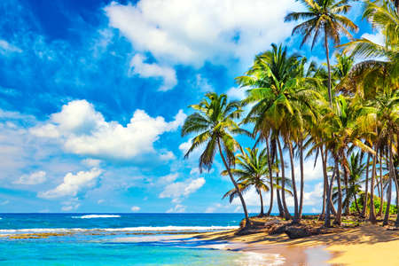 Palm trees on the wild tropical beach in Dominican Republic. Vacation travel background. Archivio Fotografico
