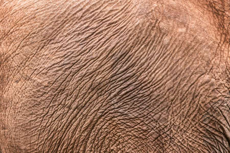 Texture of African elephant skin. Elephant skin background pattern. Stock Photo