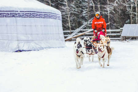 Husky dogs are pulling sledge with a kid in winter in Finland.