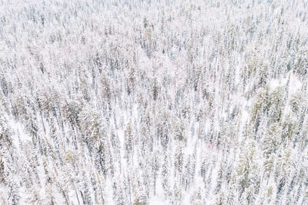 Aerial drone view of the forest in winter. Winter landscape with fir trees in snow from above. Archivio Fotografico