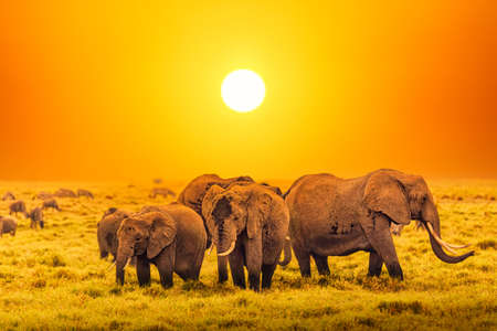Artistic fantastic african sunset landscape. African elephants in Serengeti National Park. Tanzania, Africa at a sunset