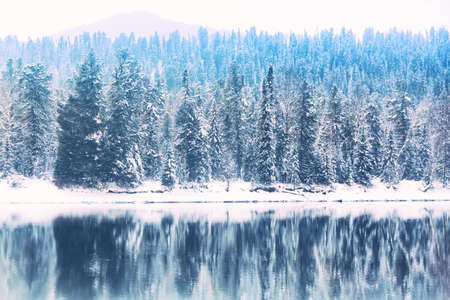 Winter forest river landscape. Snow covered trees and river with reflections against mountain. Altai Republic, Russia