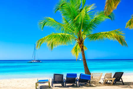 Palm trees with lounge chairs on the caribbean tropical beach. Saona Island, Dominican Republic. Vacation travel background. Фото со стока