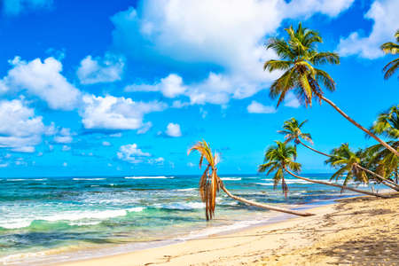Palm trees on the wild tropical beach in Dominican Republic. Vacation travel background. Фото со стока