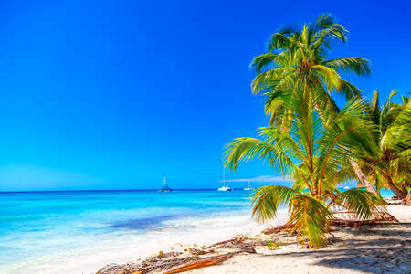 Summer vacation and tropical beach concept. Sandy beach with palms, sailboats and turquoise sea. Vacation island