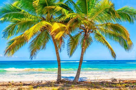 Vacation travel background. Palm trees on the wild tropical beach in Dominican Republic Stockfoto