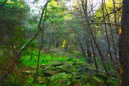 opruimen in het bos Stockfoto