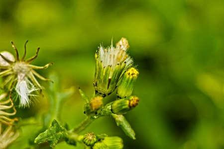 Flora of the Mediterranean scrub