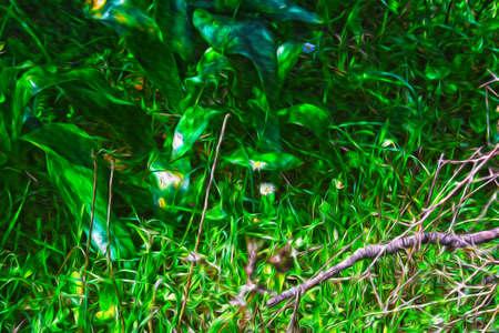 clearing in the woods Zdjęcie Seryjne