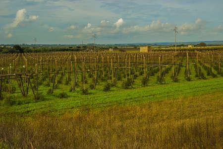 agricultural landscape background. Stock fotó