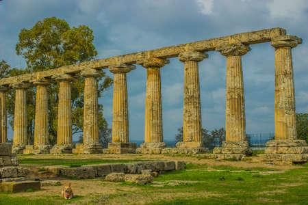 temple of hera in metaponto Archivio Fotografico - 114952016