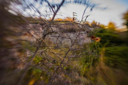 Mediterranean scrub with blur background.
