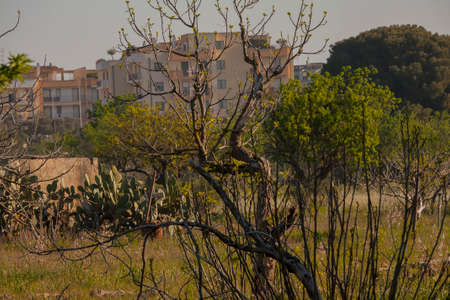 suburbs of grotesques