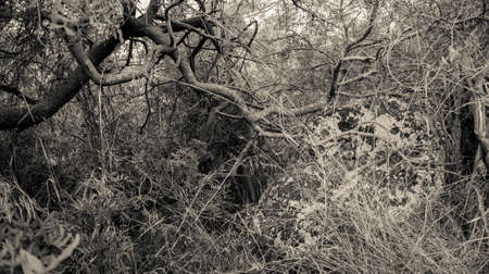 undergrowth 版權商用圖片
