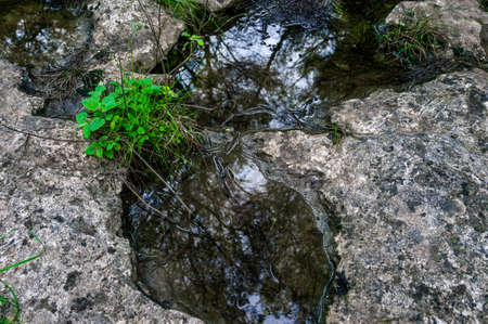 puddle in the rock background.